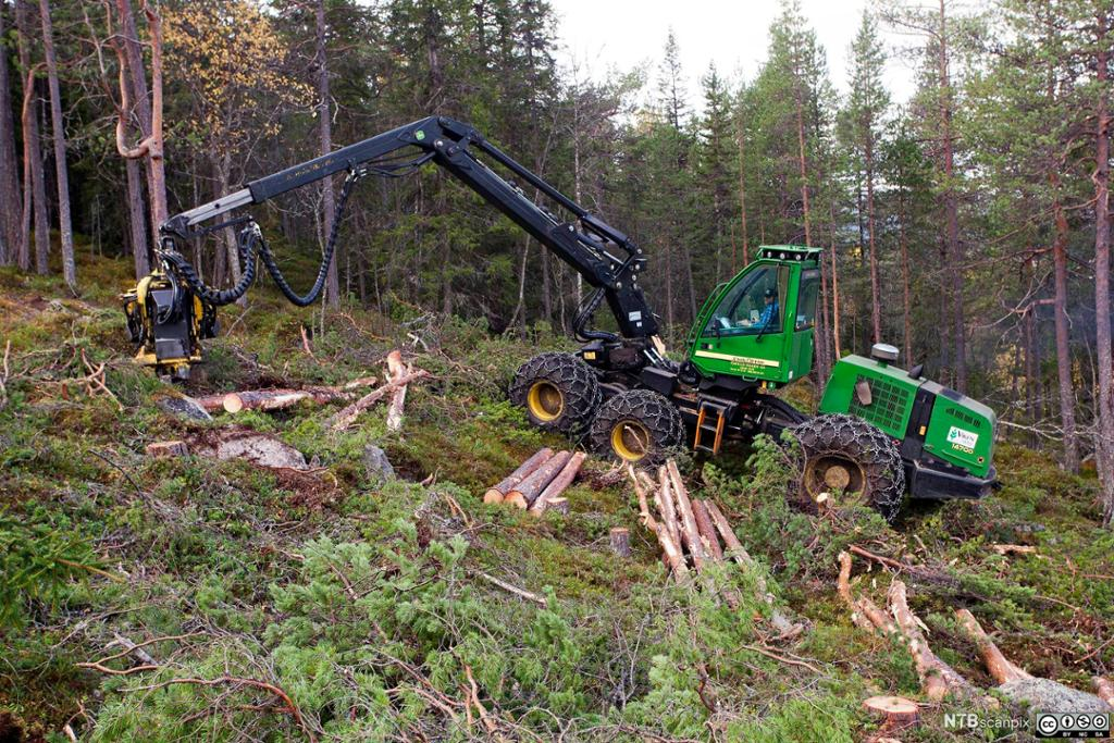 Skogsmaskin i arbeid. Foto.