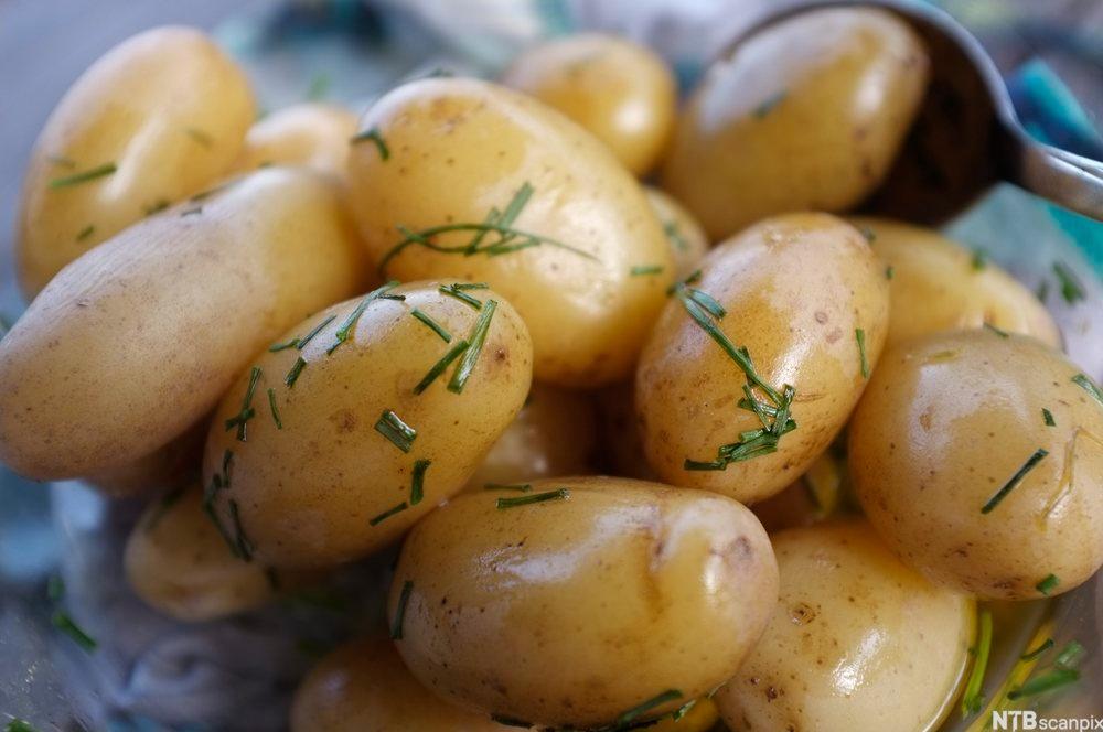 Kokte nypoteter med gressløk. Foto.