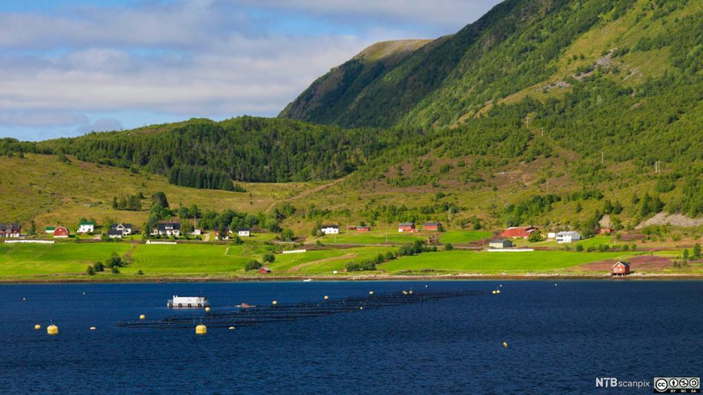 Utsikt fra Hurtigruten. Jordbrukslandkskap og fiskeoppdrett i Nordland. Foto.