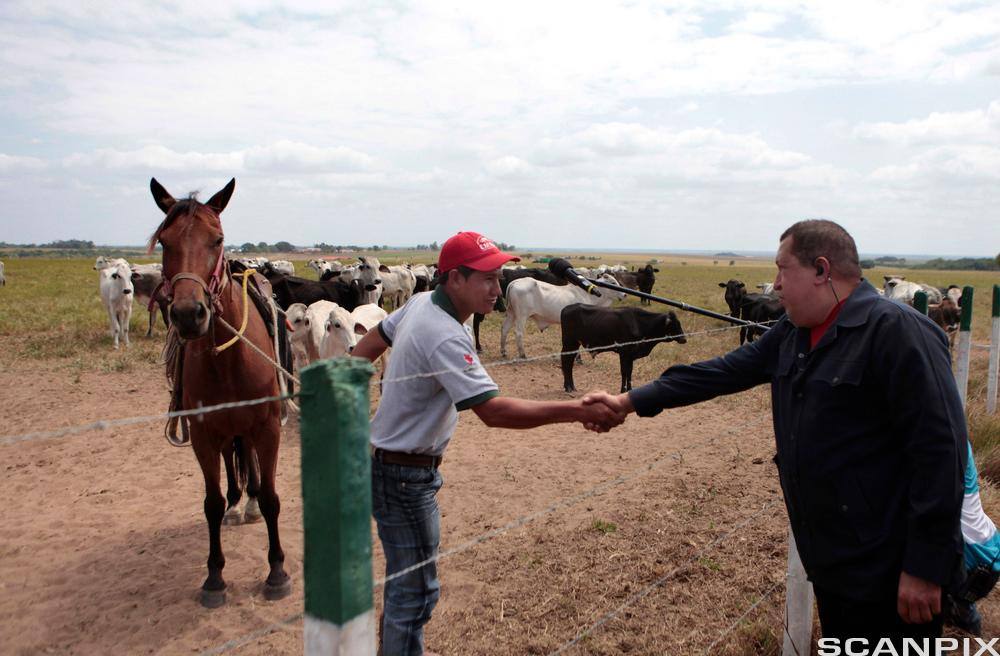 Hugo Chavez shaking hands with an agricultural worker.