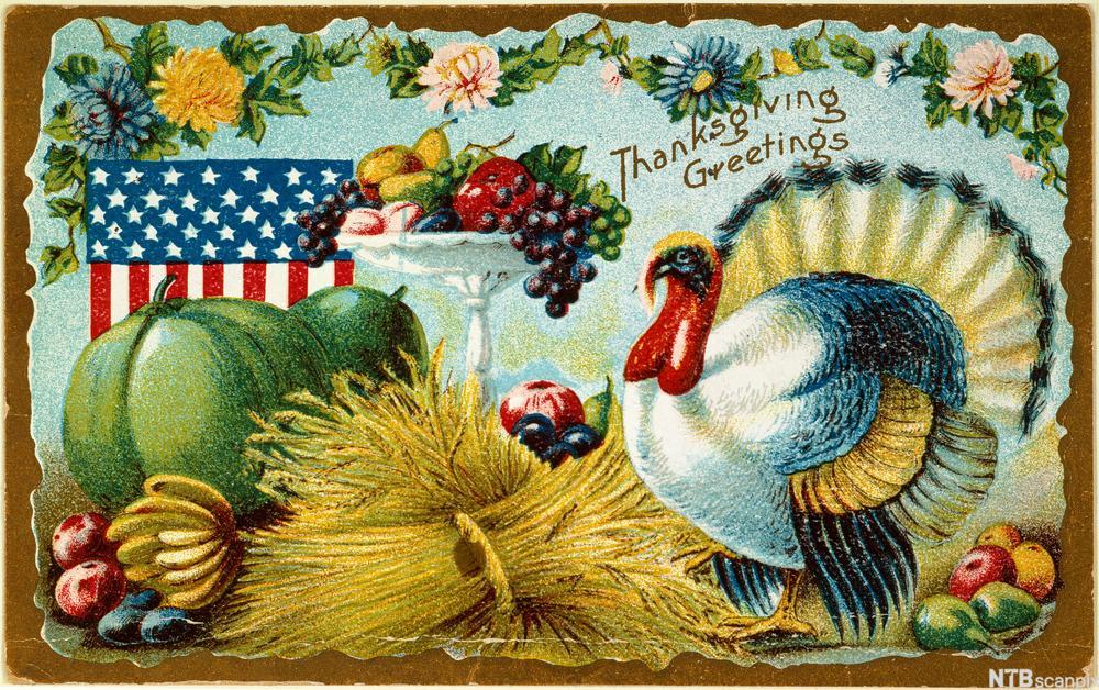 Bilde av et thanksgiving kort