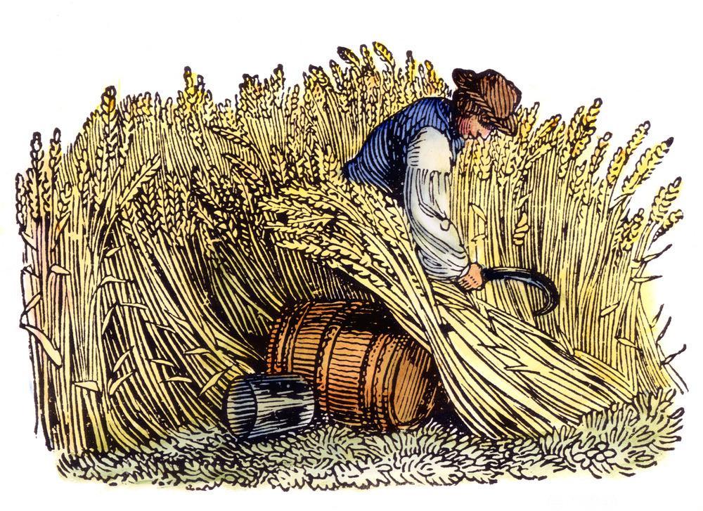Høsting av korn. Tresnitt, ca 1800. Maleri.