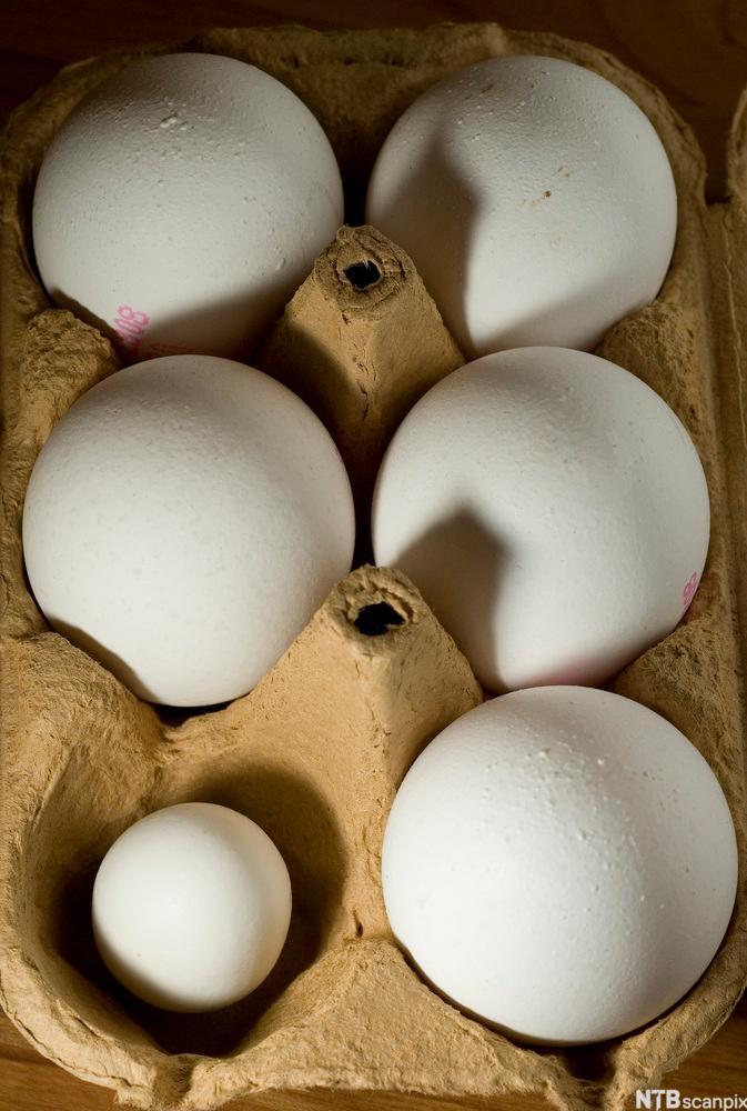 Bilde av seks egg i ulik størrelse