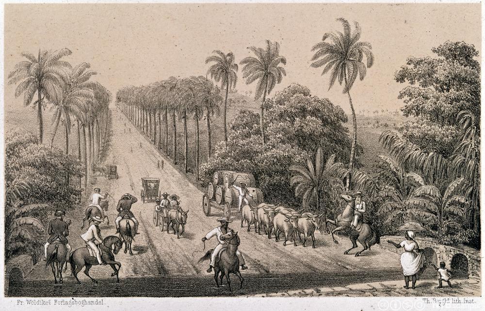St.Croix i det danske Vest-India. Litografi.