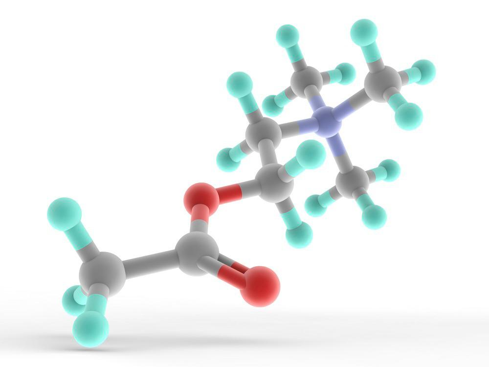 Molekylmodell av signalstoffet acetylkolin.