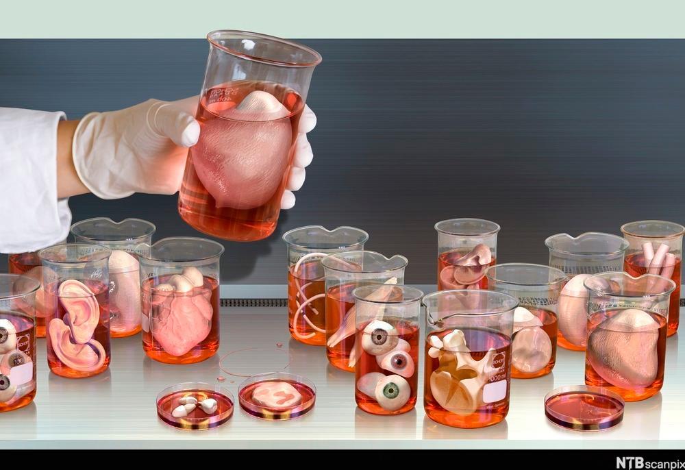 Modell av tenkt organbank med ulike oganer på glass.