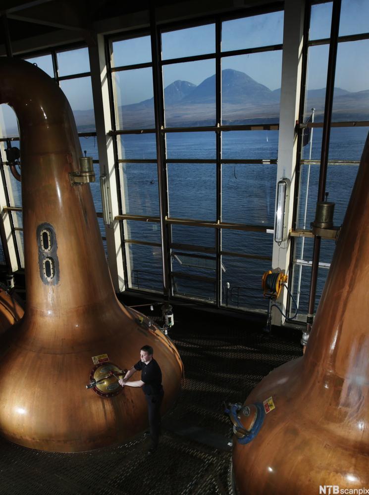bilde av kobberkjeler i et whisky destilleri