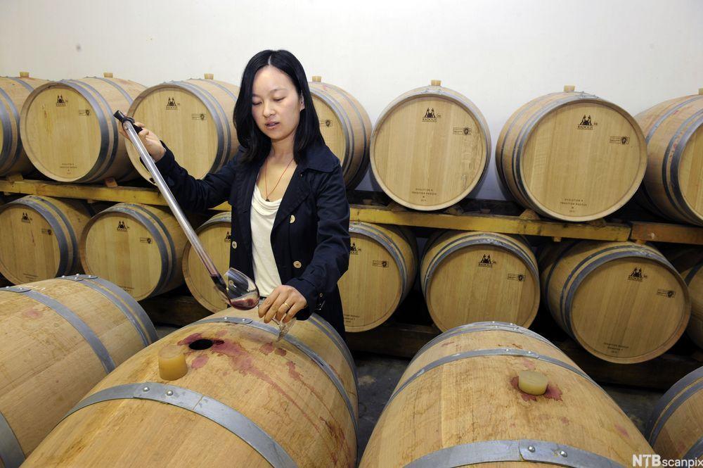 bilde av En ansatt tar vin ut av en tønne i lageret til Chateau Laulan-Ducos i Médoc