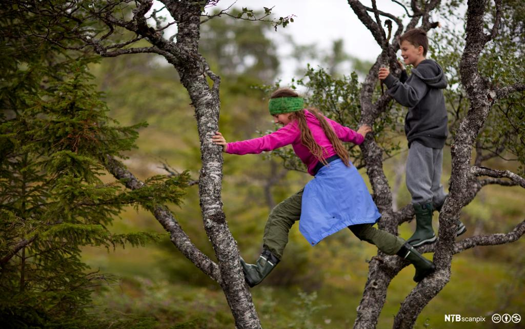 To barn klatrer i trær i skogen. Foto.
