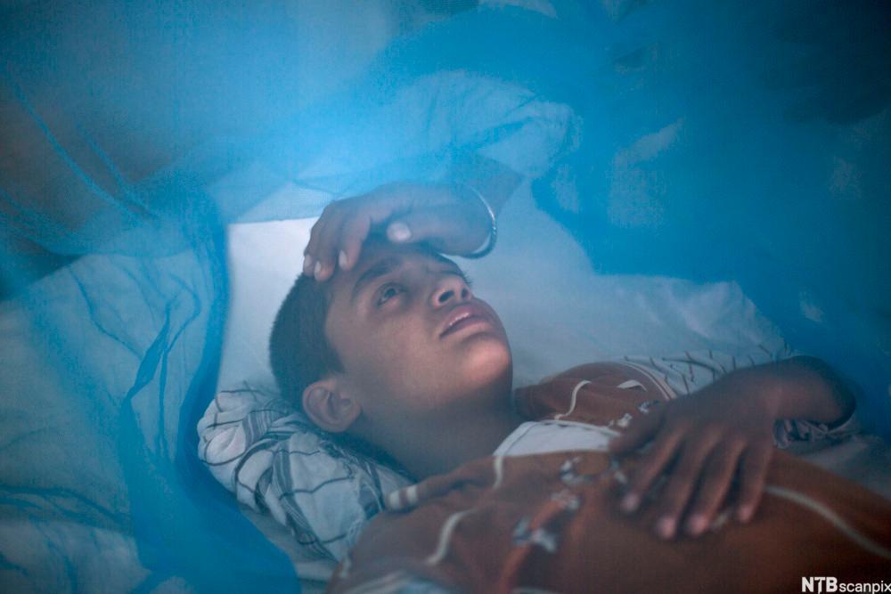 Gutt som er rammet av dengue