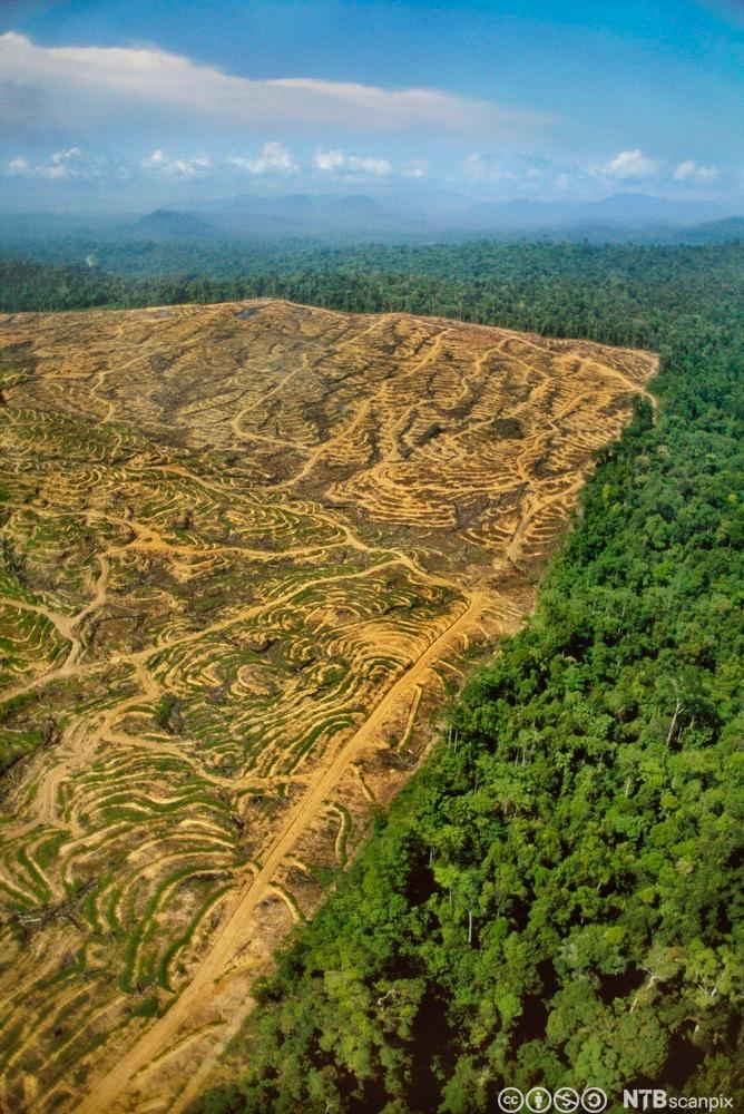 Clearcutting the Rainforest