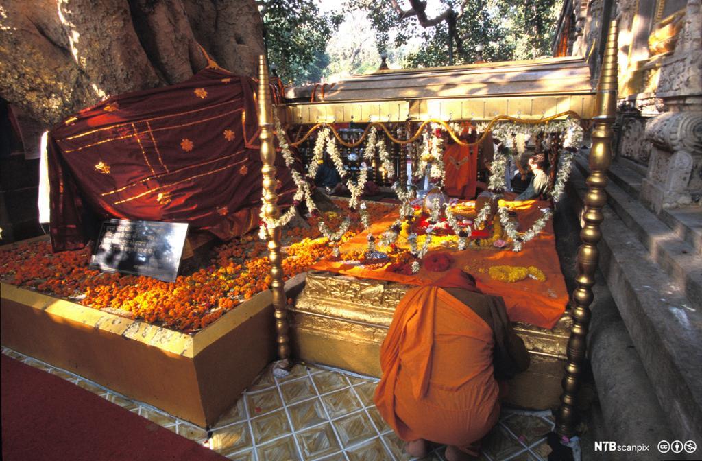 Person i oransje drakt kneler foran en trone som står mellom et tre og en bygning. Foto.