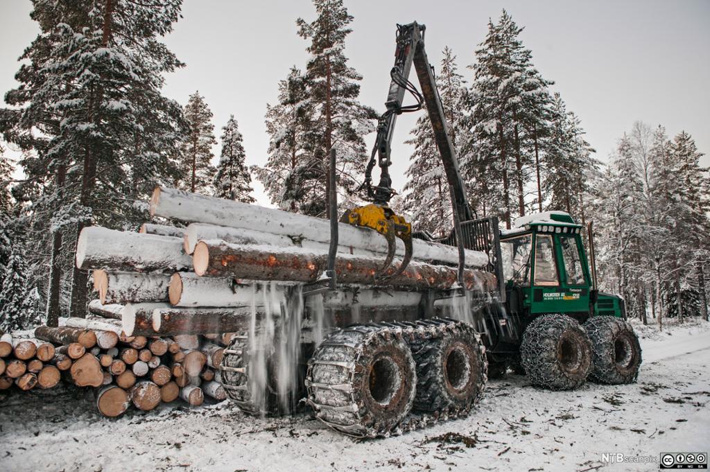 Tømmerhogst med lassbærer i Nordmarka. Foto.