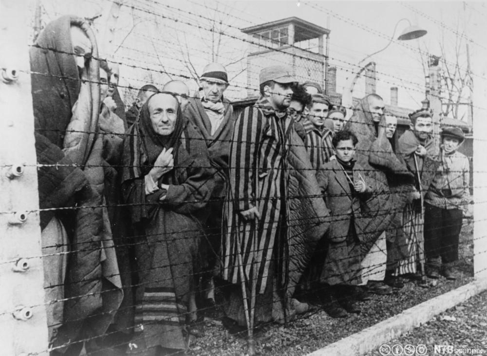 Fanger i Auschwitz ved frigjøringen i 1945. Foto.