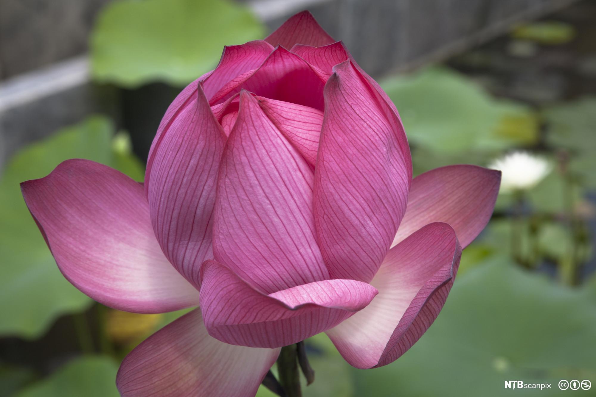 Du må tenke på blomsten som et menneske av og til