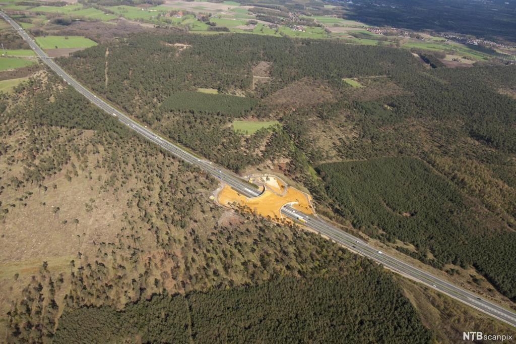 Flyfoto som viser at det er bygd bro over en hovedvei for å bevare sammenhengende beiteområde for dyr. Foto.