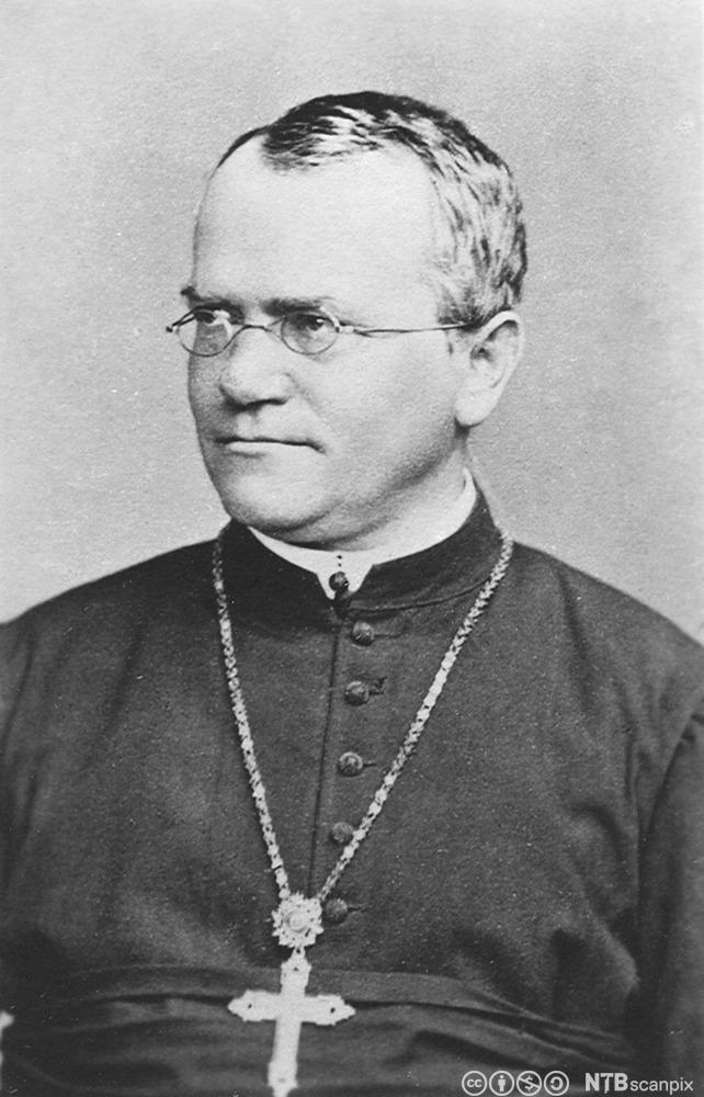 Gregor Johann Mendel. Foto.