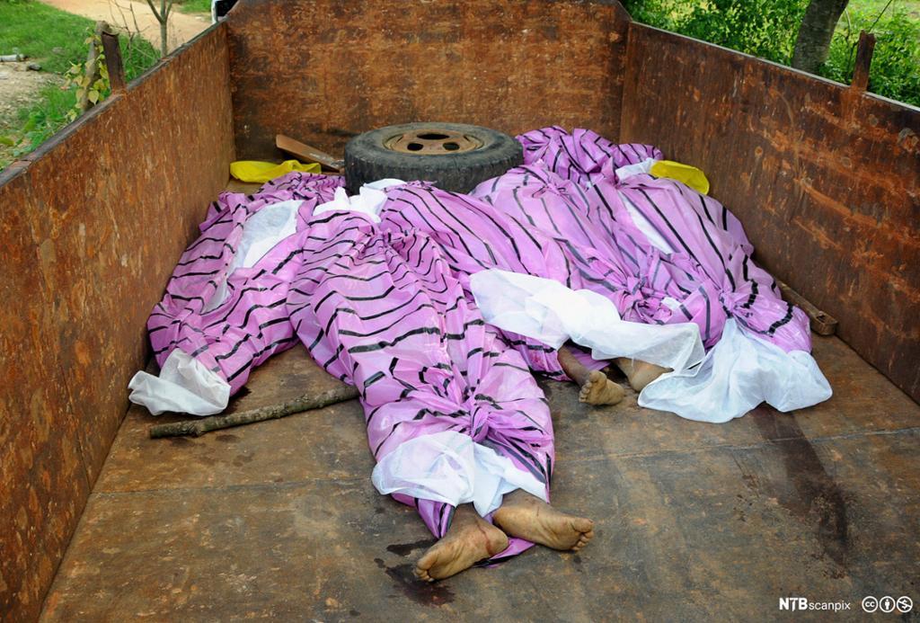 Et fotografi av tre døde kropper under et teppe.