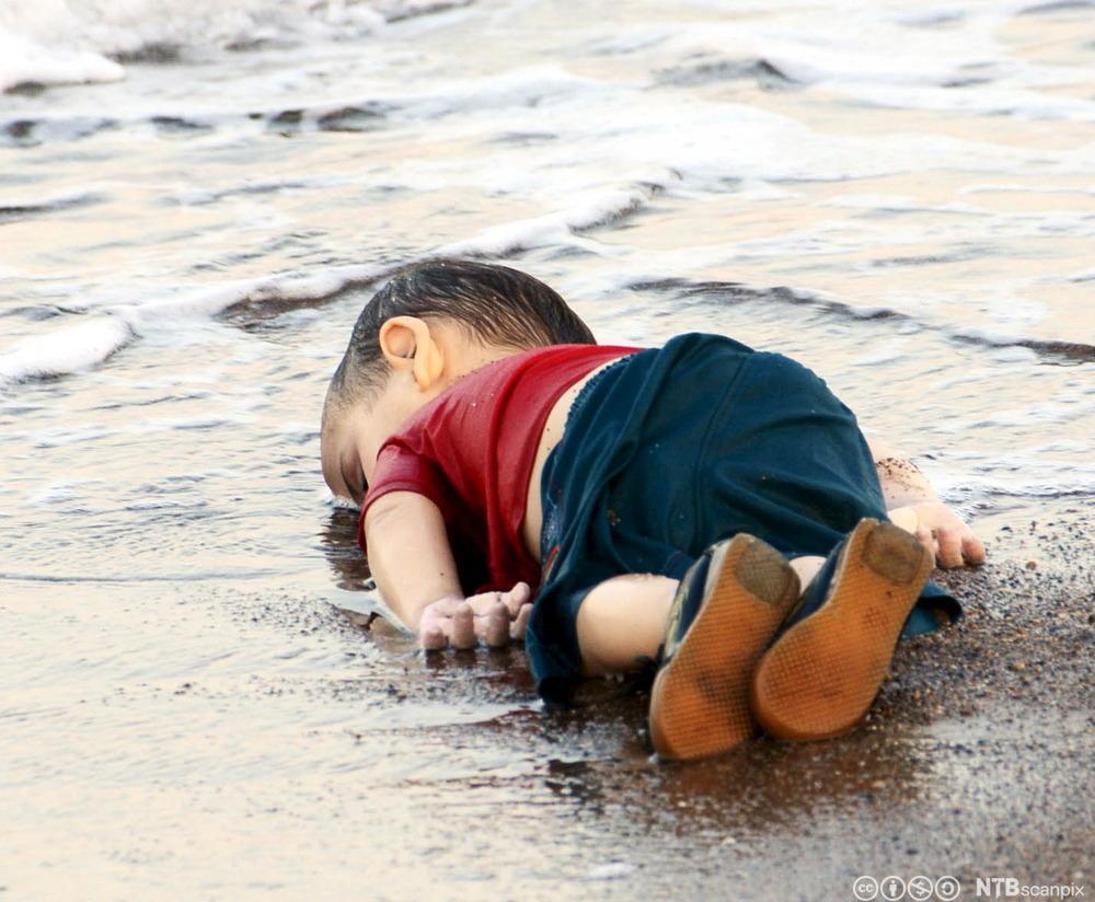 Liket av en liten kurdisk gutt i vannkanten. Fotografi.