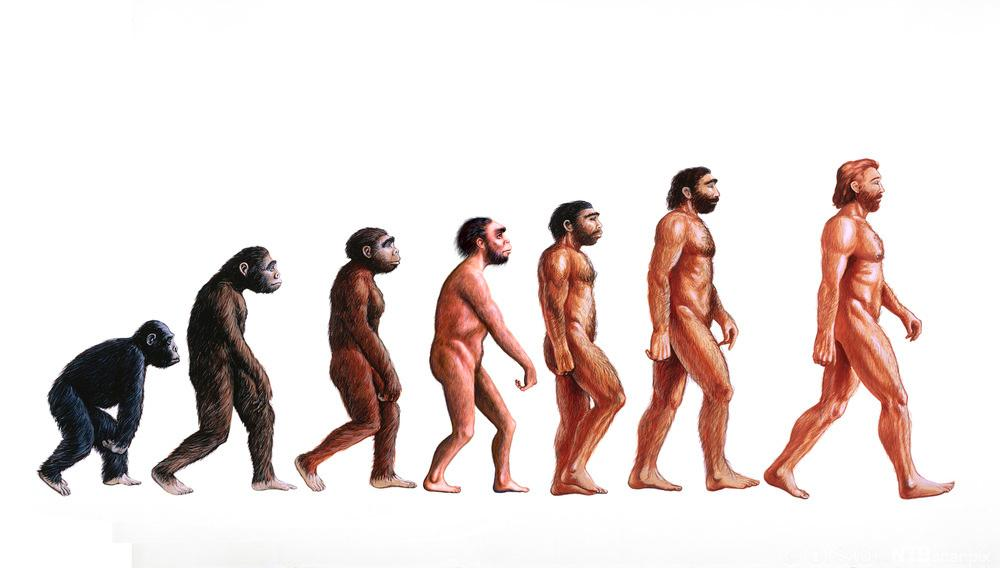 Mennesket si utvikling frå Proconsul til Homo sapiens sapiens. Illustrasjon.
