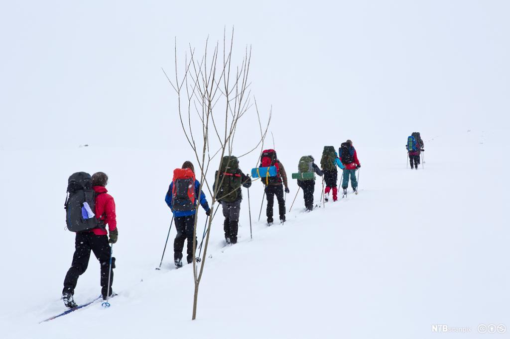 Skiløpere etter hverandre på Hardangervidda. Foto.
