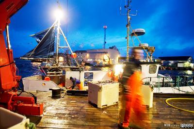 Lossing av fiskefangst i havna på Røst. Foto.