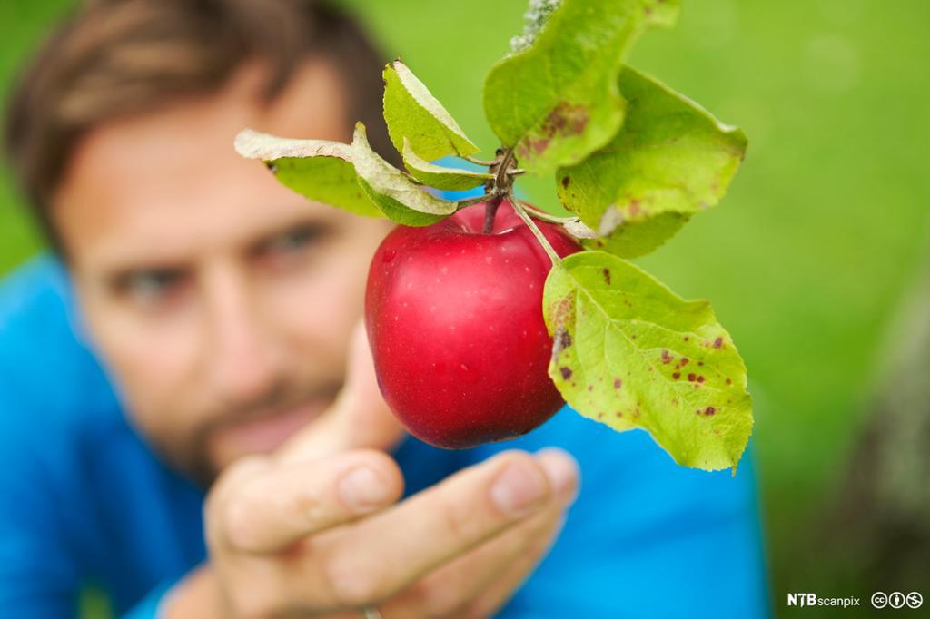 Mann som strekker seg etter et rødt eple. Foto.