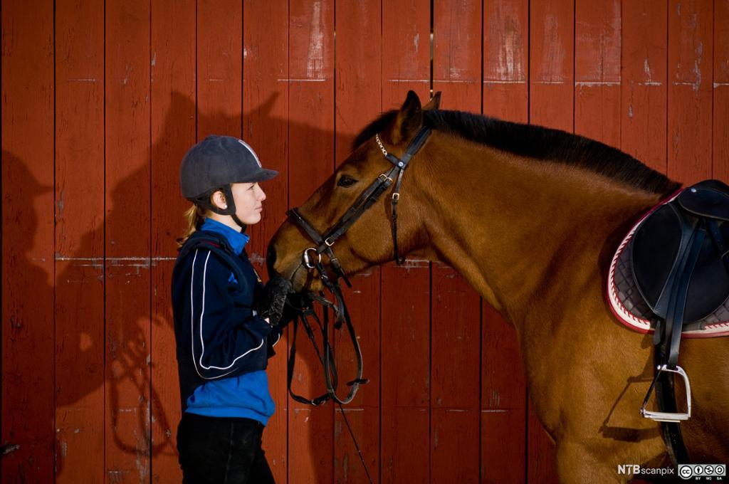 Jente med hest. Foto.