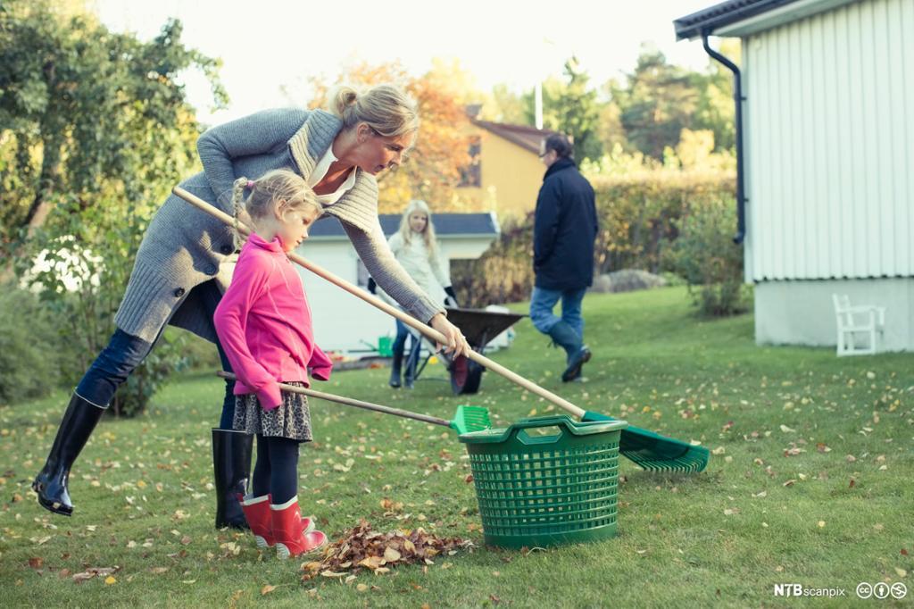Mor og datter raker løv. foto.