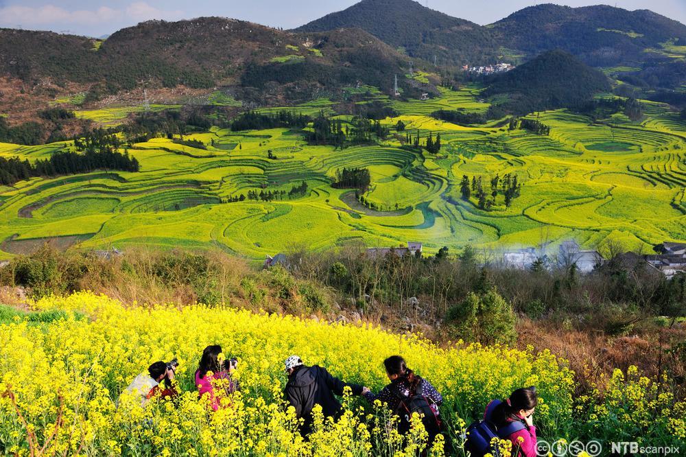 Blomstereng i Yúnnán-provinsen i Kina. Foto.