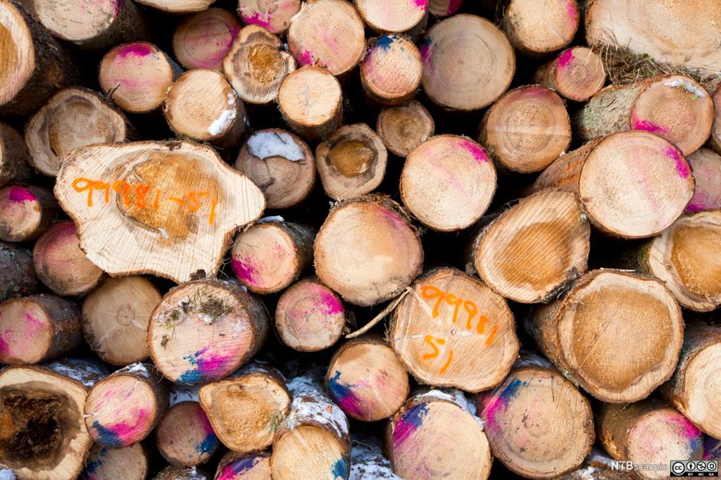 Nummererte tømmerstokker stablet opp i tømmerlunne klar for uttransport. Foto.