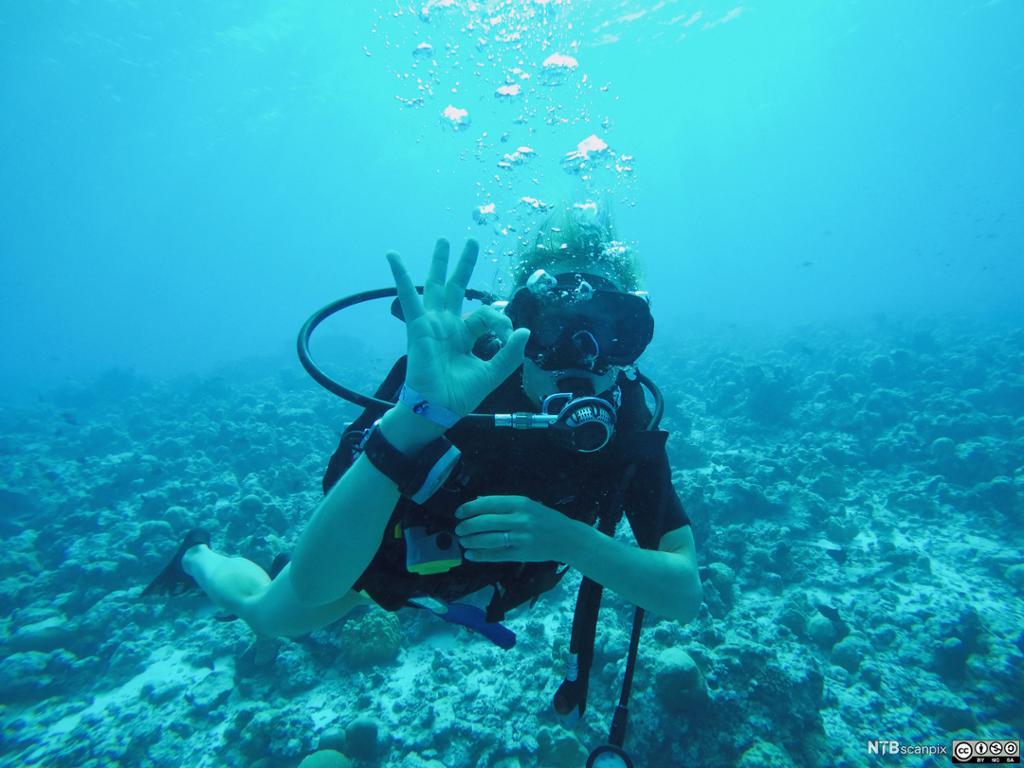 En undervannsdykker viser at alt er perfekt, OK, med en håndbevegelse. Foto.
