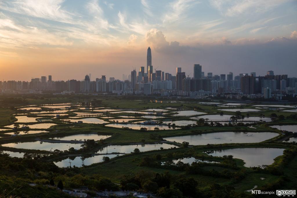Våtmarksområder utenfor Hong Kong. Foto.