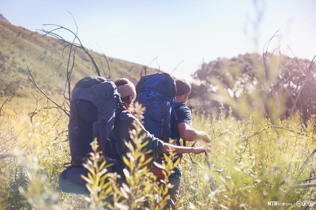 Young couple with backpacks hiking in sunny tall grass field.
