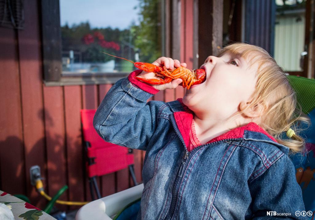 Jente spiser kreps. Foto.