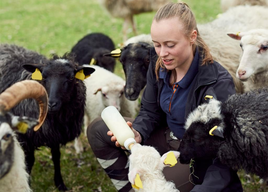 Ung kvinne gir et lam melk fra en tåteflaske. Foto.