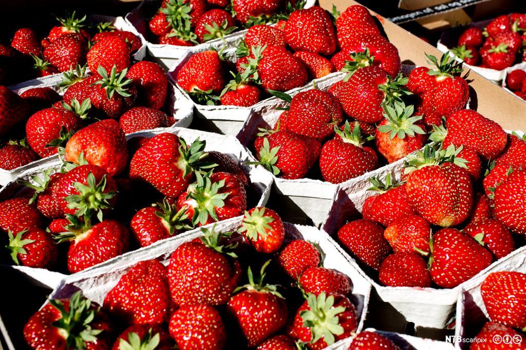 Jordbær, bringebær og blåbær i ein haug. Foto.