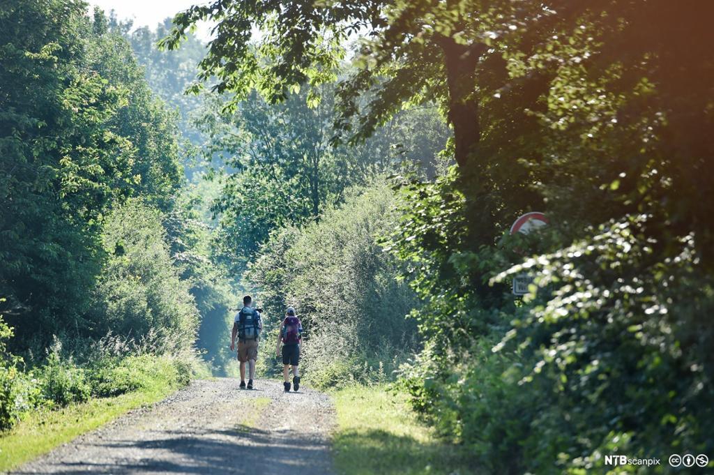 To ungdommer med ryggsekk på tur i skogen. Foto.