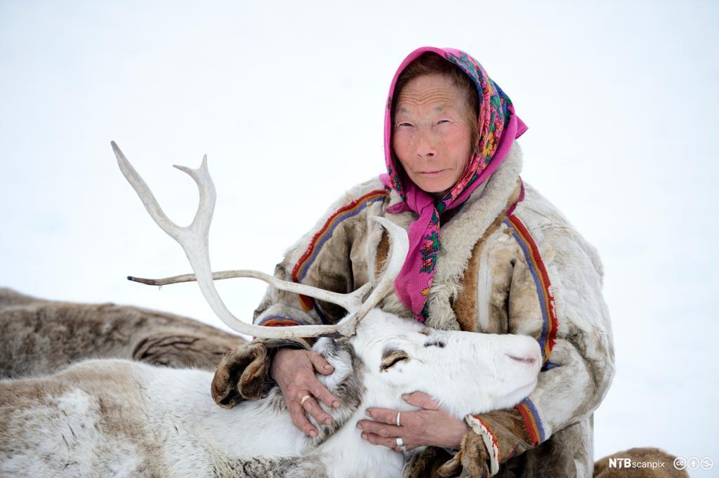 En nenetserkvinne med reinsdyr.