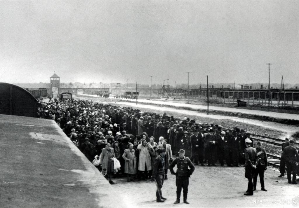 Udatert bilde som viser utvelgelsesrutinen ved Auschwitz. Ungarske jøder står oppstilt langs jernbanesporet som ender i konsentrasjonsleiren. Menn til høyre, kvinner og barn til venstre. Foran dem står offiserene som skal foreta utvelgelsen. De som ikke ble ansett som arbeidsdyktige ble sortert bort og sendt til gasskamrene.