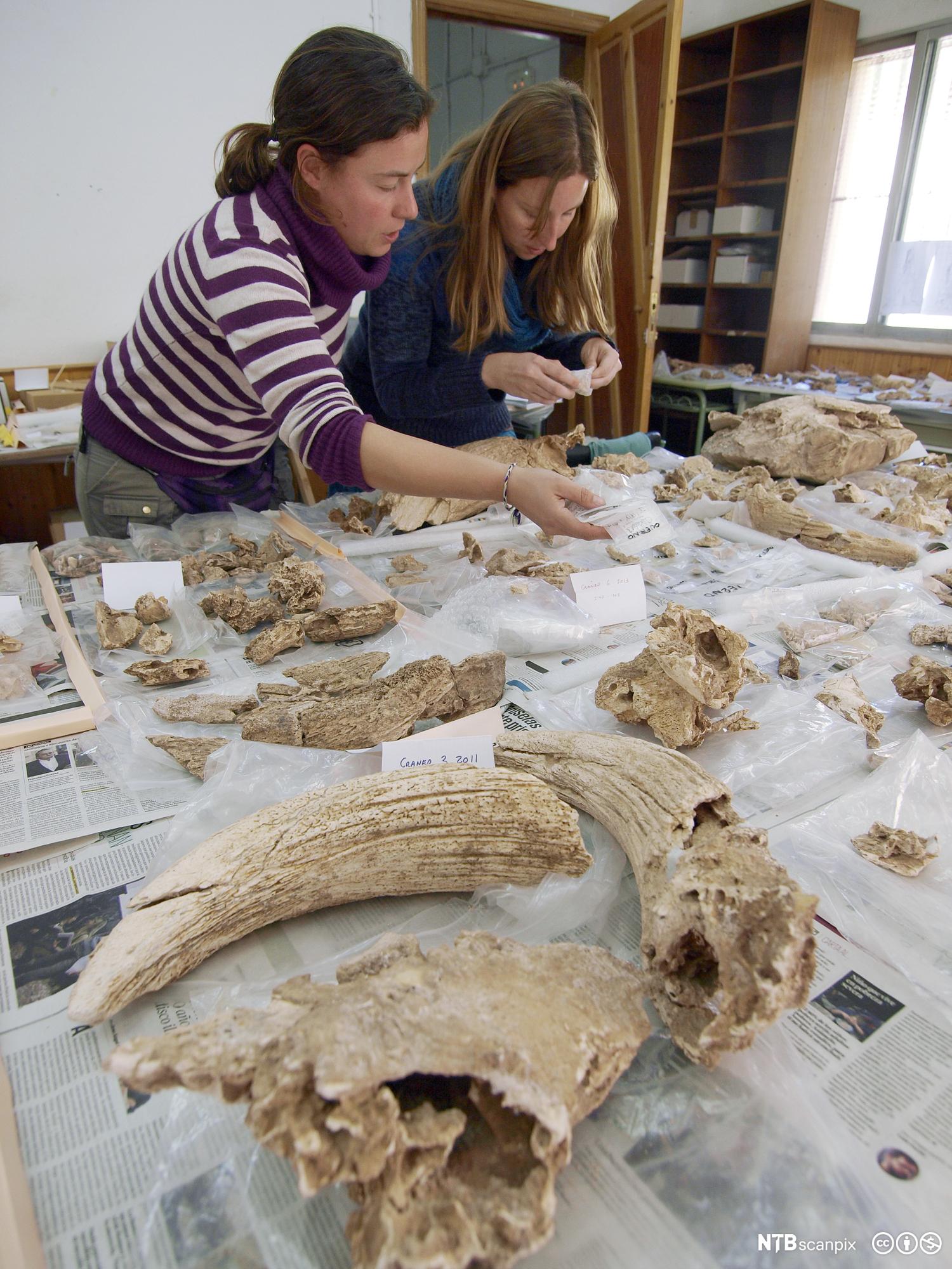 Kan du bruke Carbon dating på fossiler