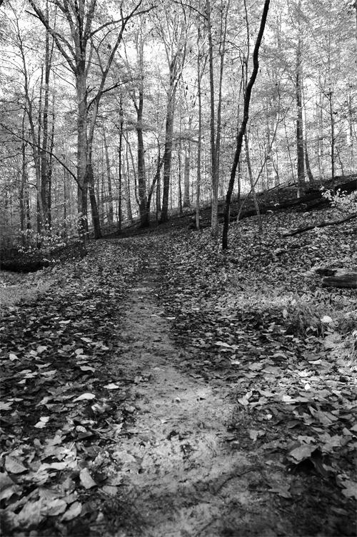 forrest road in black and white.photo.