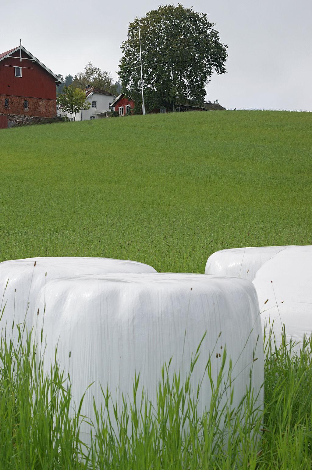 Rundballer på en grønn eng. Foto.