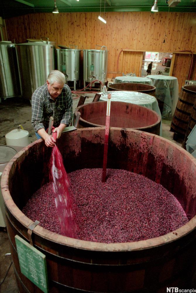 Rødvin gjærer i et stort trekar. Foto.