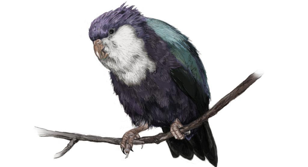 Papegøye sitter på gren. Illustrasjon