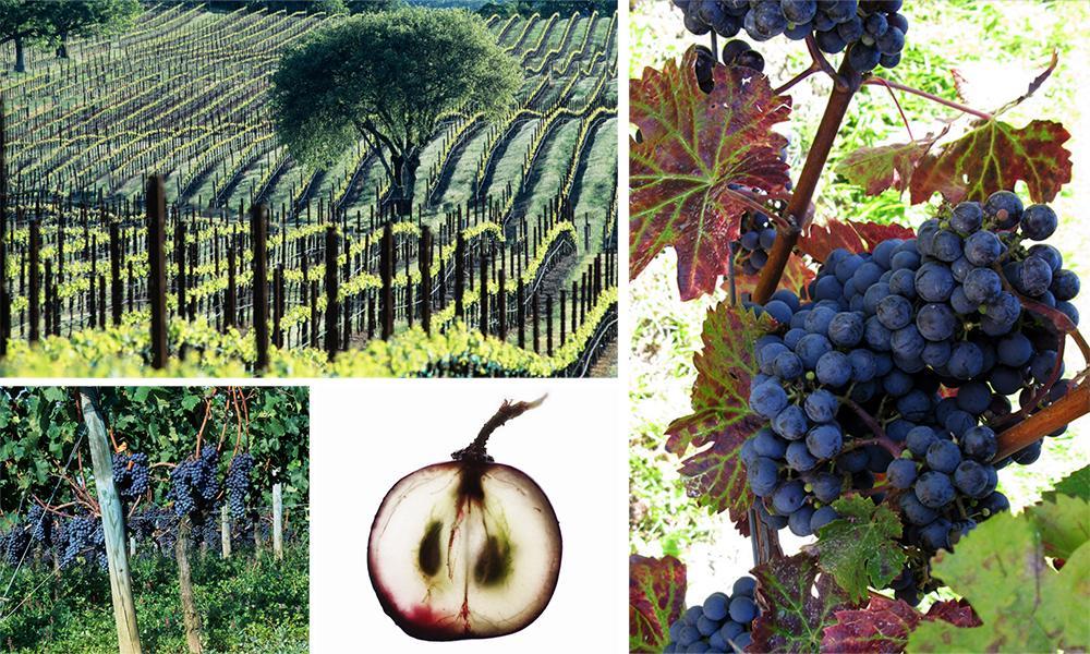 Kollasj: vinranker