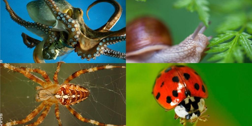 Fire virvelløse dyr i en collage: edderkopp, snegl, marihøne og blekksprut.