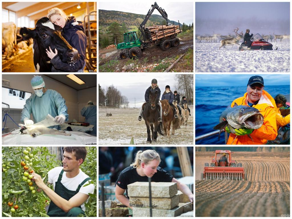 Collage av yrkesutøvere. Foto